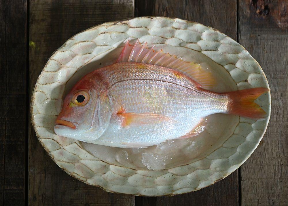 台灣赤鯮魚