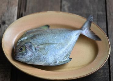 台灣黑鯧魚 中