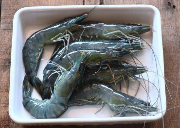台灣海草蝦