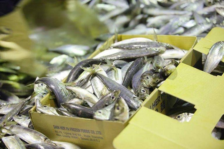 日本的竹莢魚?