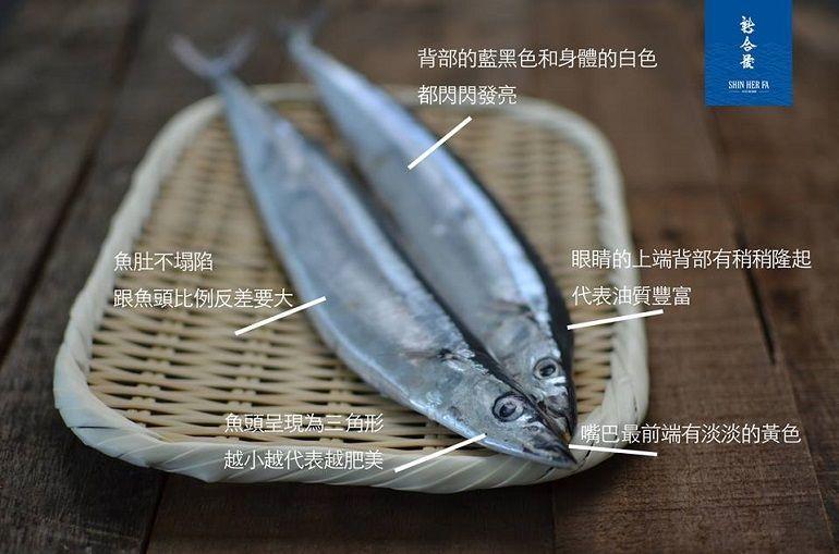 秋刀魚肥美新鮮的秘密