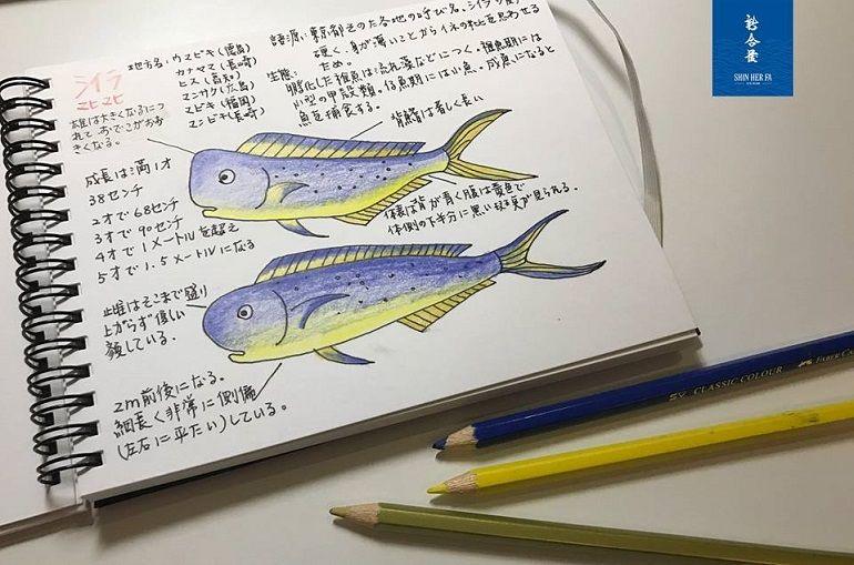 高蛋白低熱量的鬼頭刀魚