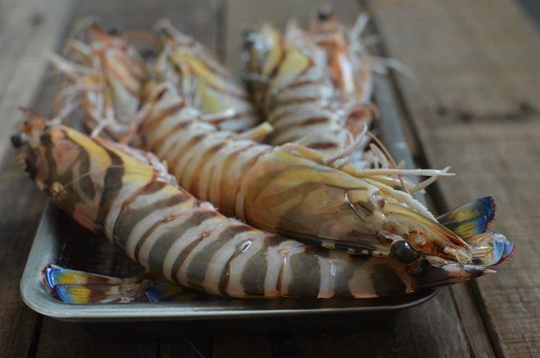 珍貴的大明蝦