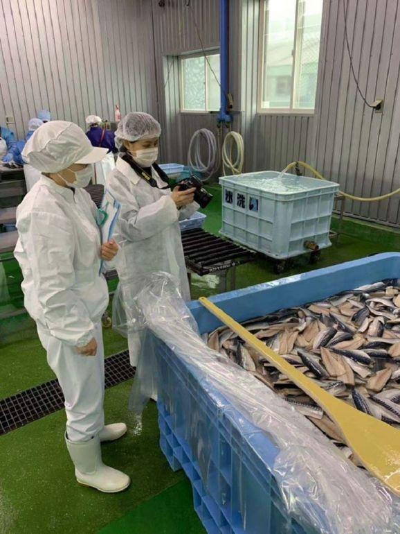 日本青森縣鯖魚工廠