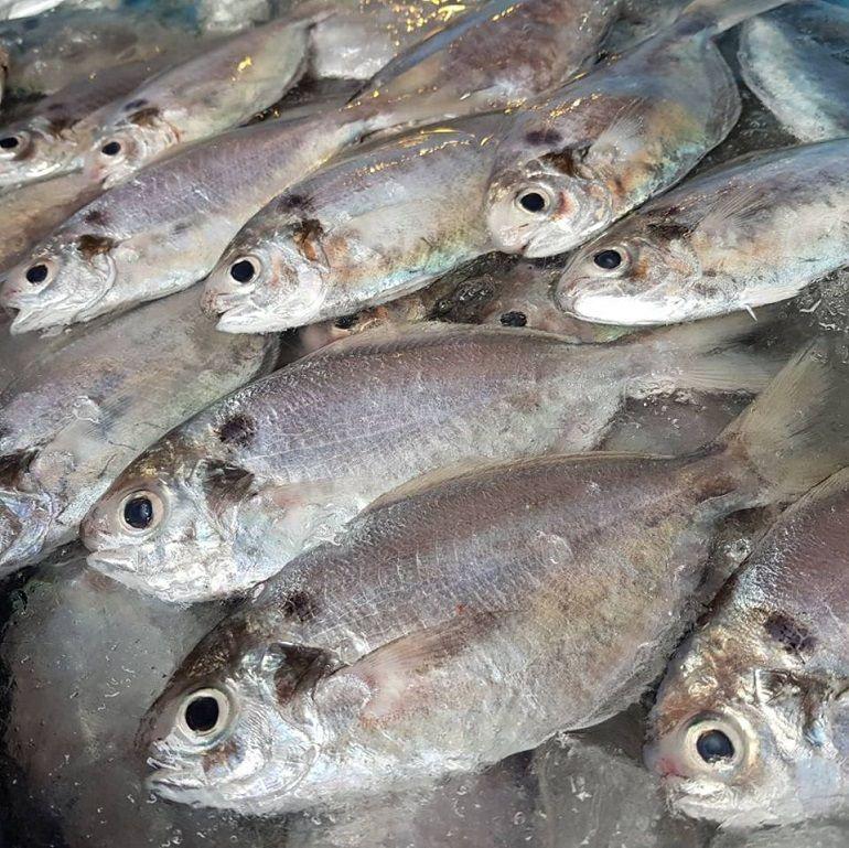 黑甘魚&肉魚進港