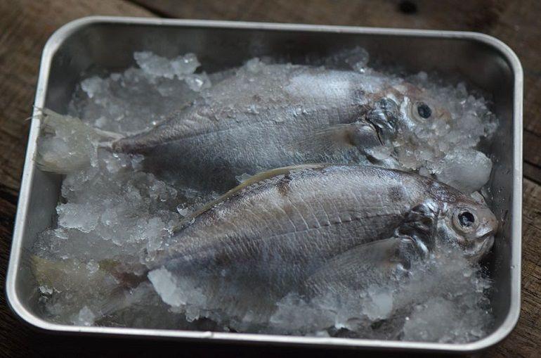 肉魚&黑魽魚&紅魽魚│入荷