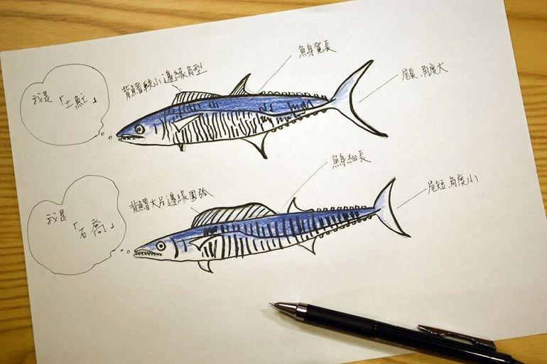 馬加魚(土魠)小知識