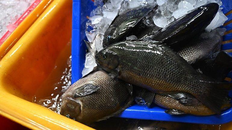又肥又嫩的黑毛魚