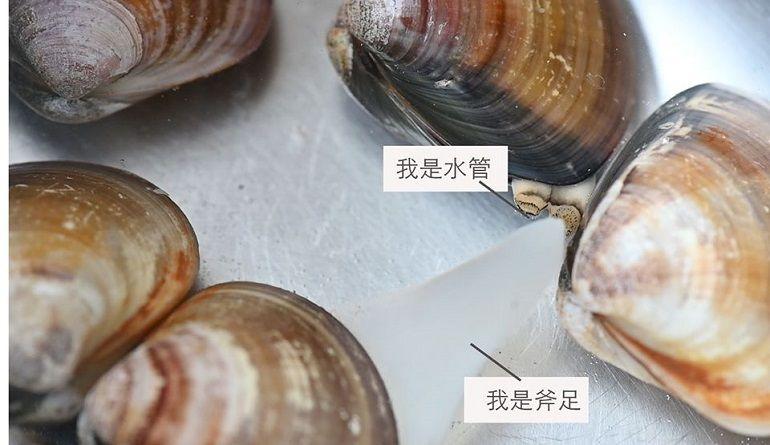 蛤蜊吐沙的時候要加甚麼?