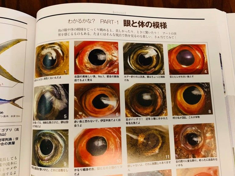 海の魚大図鑑