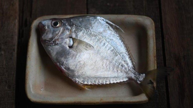 為什麼叫三角魚