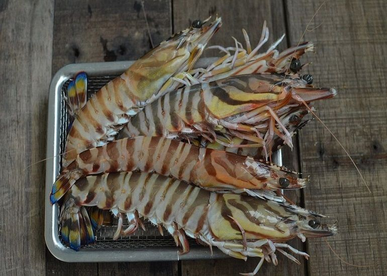 大明蝦的兩種規格