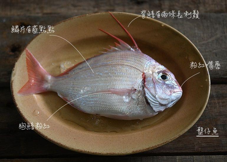 猩弟說魚時間-盤仔魚