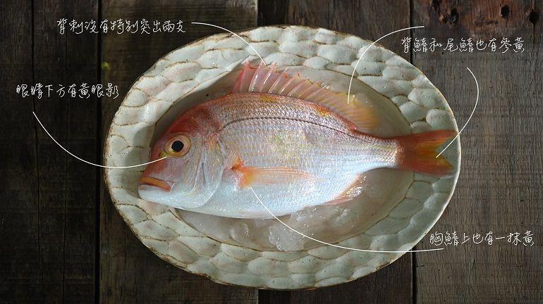 猩弟說魚時間-赤鯮魚